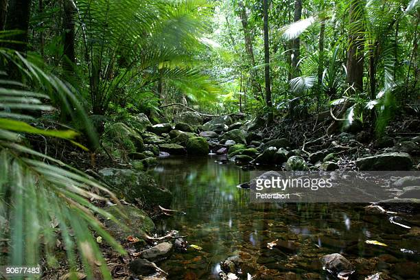 tropical_rain_forest - queensland foto e immagini stock