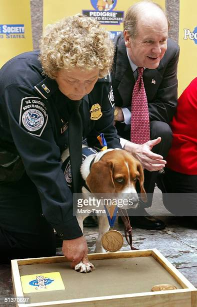 'Trouble' a US Customs and Border Protection beagle stationed at Miami International Airport is assisted with a paw print by agricultural specialist...