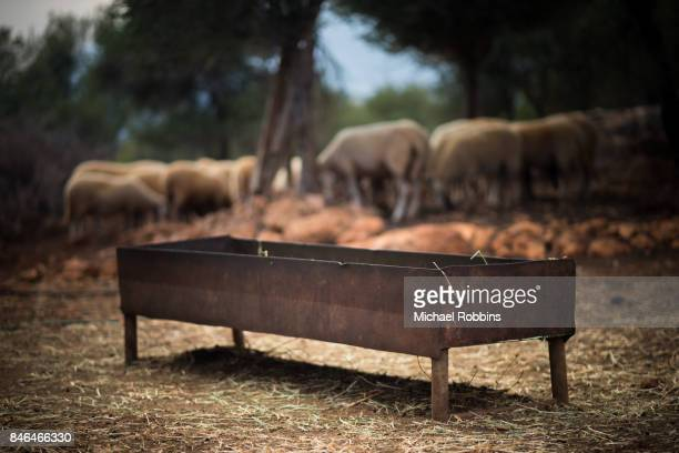 trough - trough stock photos and pictures