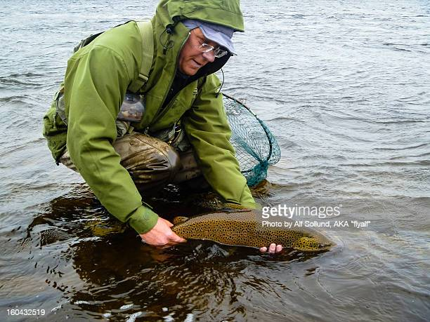 trout caugt at swan isle kola - brown trout stock pictures, royalty-free photos & images