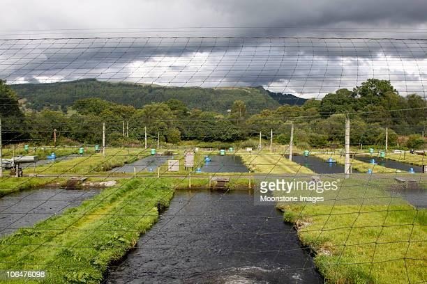 Trucha granja en las colinas Trossachs, Escocia