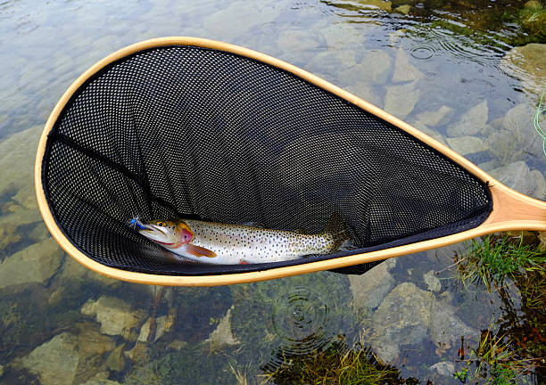 Trout In Net At Alpine Lake Wall Art