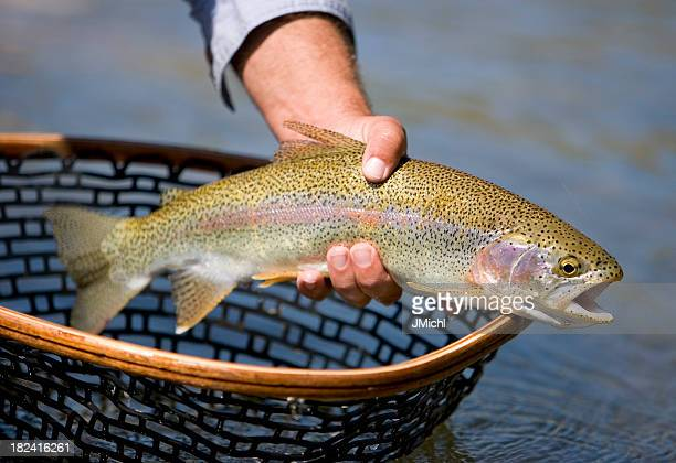 Trout Forelle