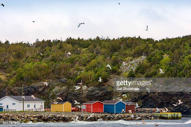 Trout River Colourful Sheds