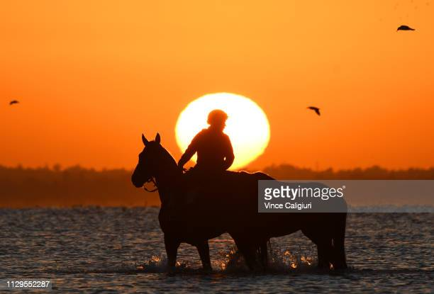 Troy Parkinson riding Fabrizio and leading 2yr old Vinicunca from the Gai Waterhouse and Adrian Bott stable during a trackwork session at Altona...