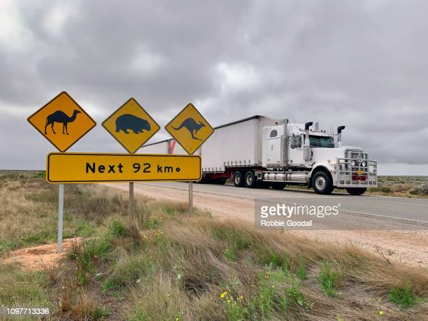truck and road sign warning about camels, wombats and kangaroos on the road while crossing the nullarbor plain. eyre highway, south australia - mammal stock pictures, royalty-free photos & images