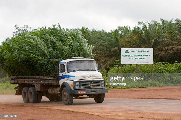 A truck carries palm plants at the Agropalma Group facility in Tailandia Para Brazil on Monday March 27 2006 Agropalma produces biodiesel from the...