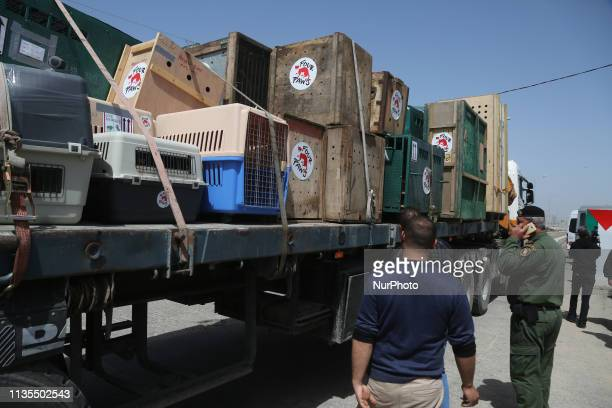 A truck carrying crates containing animals leaves Gaza after the animals were taken out of a Gaza zoo by FOUR PAWS organization at Israeli Erez...