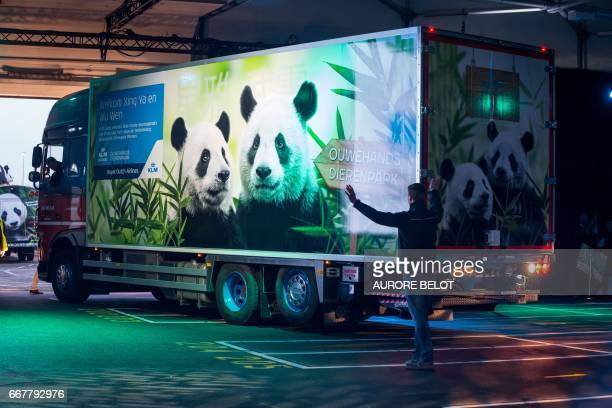 A truck carrying the panda cubs Xing Ya and Wu Wen arrives in a warehouse at Schiphol airport in Amsterdam on April 12 2017 after the cubs landed...