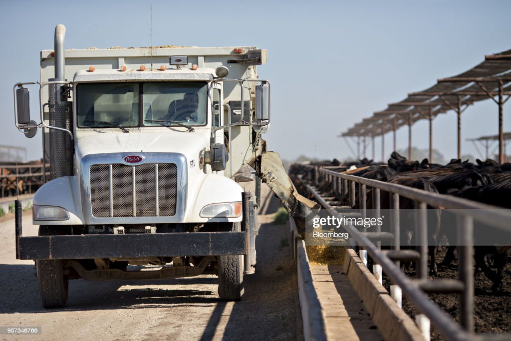 Operations At Texana Feeders Beef Cattle Feedlot As Trump Led U.S. To Brink Of Trade War : News Photo