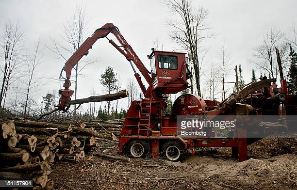 Truck driver Keith Gustufson loads trees into a chipping machine to be shredded and loaded into a truck on state forest land near Little Rice...