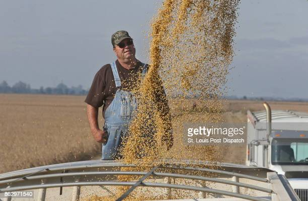 Truck driver Marion Howard watches soy beans load into his truck on Wednesday Oct 11 at Chris Crosskno's farm near Denton Mo Crosskno is busy...