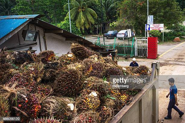 A truck loaded with oil palm fruit sits parked at the Sime Darby Bhd West Oil Mill in Pulau Carey Selangor Malaysia on Wednesday Feb 11 2015...