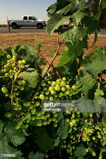 A truck passes a vineyard slated to be replaced by apartment homes on Route 66 on June 15 2007 in Rancho Cucamonga California Route 66 opened in 1926...