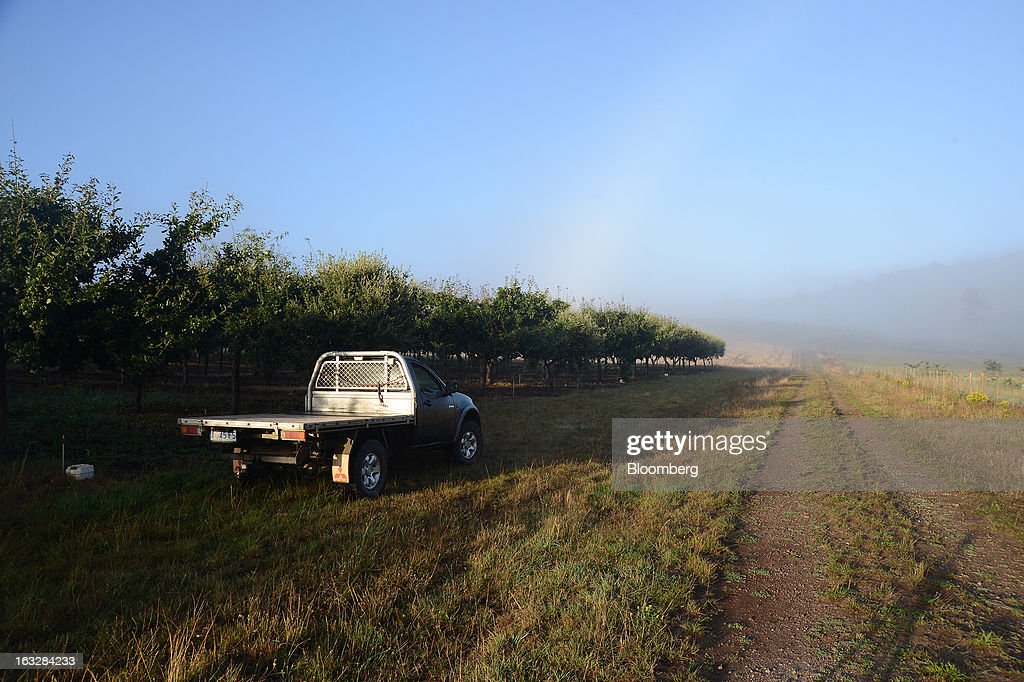 A truck stands near rows of English Oak and Holm Oak, host trees to truffles, as fog rises over the Truffles Australis Pty. Ltd. plantation near Deloraine, Tasmania, Australia, on Monday, Feb. 25, 2013. Australia's gross domestic product grew 3.6 percent last year, the best performance since a 4.7 percent expansion in 2007, data from the Australian Bureau of Statistics compiled by Bloomberg showed. Photographer: Carla Gottgens/Bloomberg via Getty Images