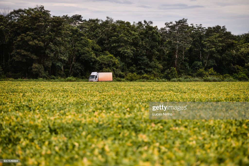 Truck traveling in the middle of a soybean plantation. : Stock Photo