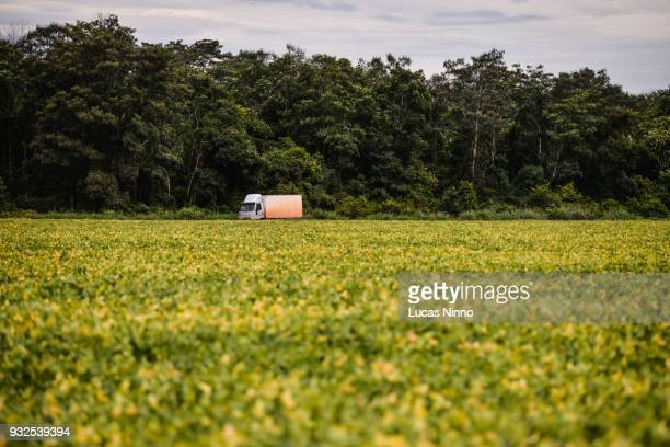 truck traveling in the middle of a soybean plantation. - mato grosso state stock pictures, royalty-free photos & images