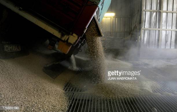 A truck unloads soy bean at the General San Martin port on the Parana river banks near San Lorenzo Santa Fe some 350 km northwest of Buenos Aires...