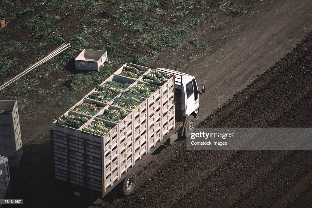 Truck with harvested onions : Stockfoto