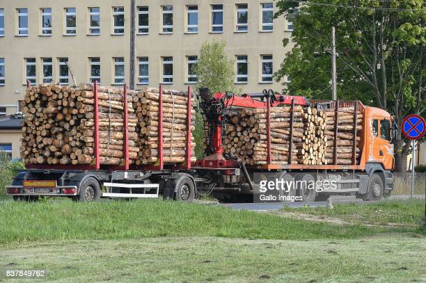A truck with wood seen on August 09 2017 near Bialowieza Poland The Bialowieza National Park is best known for the protection of the Bialowieza...