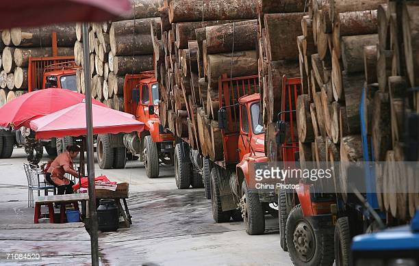 Trucks carrying logs line up for geting pass the custom on March 14 2006 in Panwa Kachin State Special Region 1 of Kachin State Myanmar The Kachin...