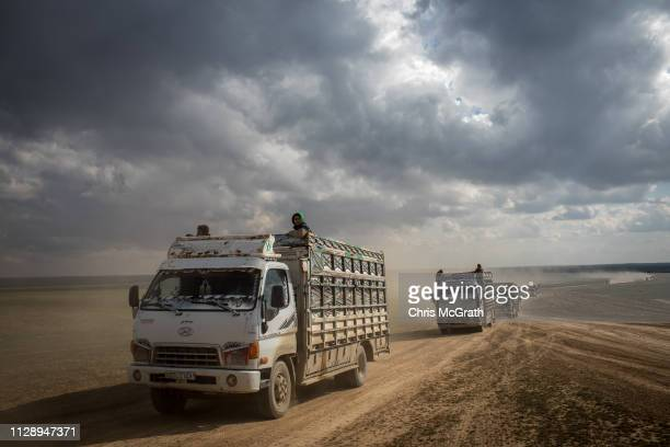 Trucks of civilians who have fled fighting in Bagouz are transported to a camp after being screened by members of the Syrian Democratic Forces at a...