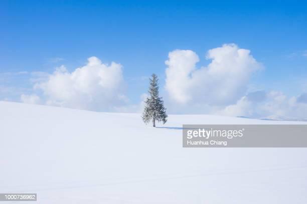 True Christmas tree in snowy hill at Biei Hokkaido