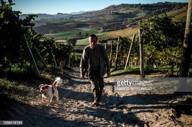 Truffle hunter Giovanni Monchiero searches for truffles with his dogs in Verduno near Alba northwestern Italy on October 24 2018 Giovanni Monchiero...