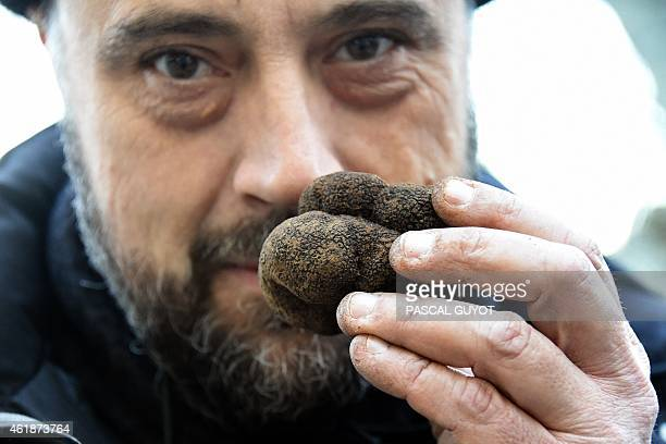 A truffle hunter smells a black truffle during the truffle market of Uzes southern France on January 18 2015 The truffle market in Uzes is held...