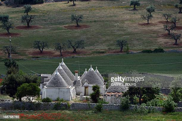 Trulli stand near Locorotondo in the Puglia region southeast of Italy on May 8 2013 A trullo is a traditional Apulian dry stone hut with a conical...