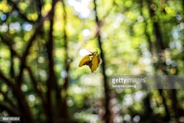 truly fall
