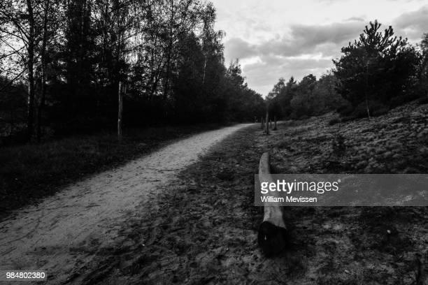trunk bench - william mevissen bildbanksfoton och bilder