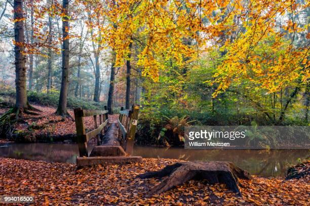 trunk bridge - william mevissen stock pictures, royalty-free photos & images
