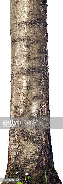 trunk isolated on a white background - log stock pictures, royalty-free photos & images