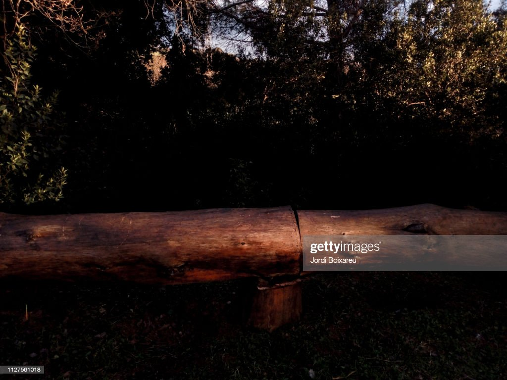 Trunk made bench : Stock Photo