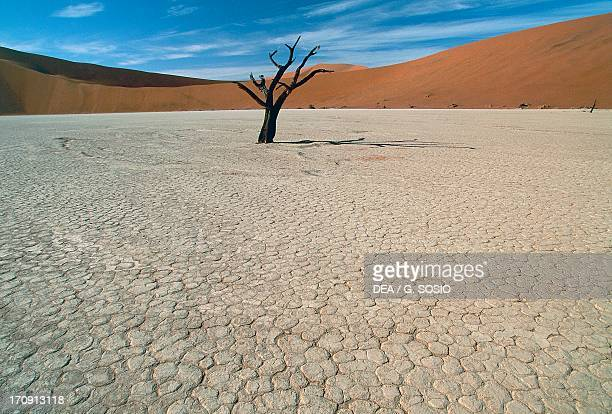 Trunk of an Acacia tree in the dry lake known as Dead Vlei Sossusvlei NamibNaukluft National Park Namibia
