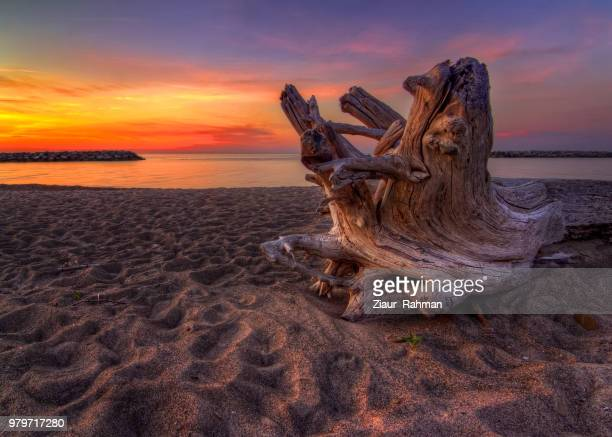 trunk on sandy shore of lake erie in presque isle state park, pennsylvania, usa - erie pennsylvania stock pictures, royalty-free photos & images