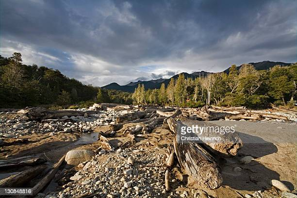 Trunks in a river bed at the lake Nahuel Huapi, national park Parque Nacional Nahuel Huapi, lake region of northern Patagonia, Argentina, South America