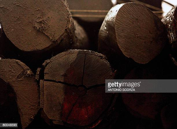 Trunks loaded in a lorry wait to be transfered from Tailandia to Belem in Para northen Brazil on February 26 2008 The Brazilian government started a...