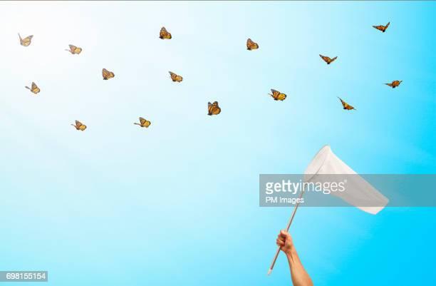 trying to catch butterflies with a net - persecución conceptos fotografías e imágenes de stock