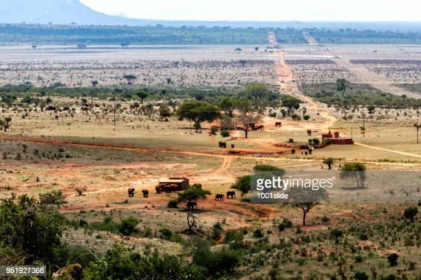 Tsavo East Afrikaanse rode olifanten
