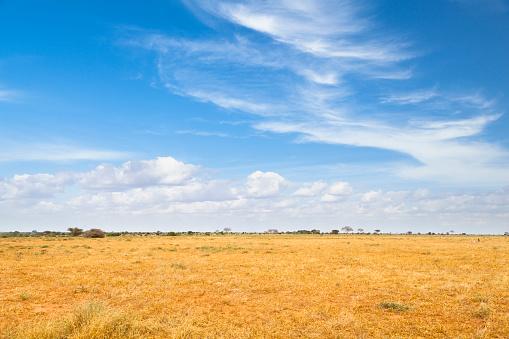 Tsavo East Landscape in Kenya 999970932