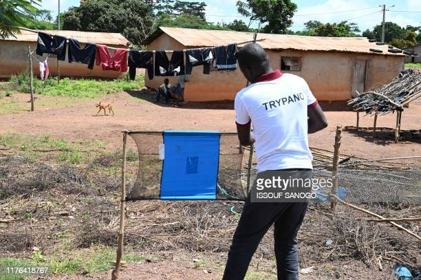 A tsetse fly trap made out of blue screens that contains insecticide is set by Pierre Richet Institute workers to eliminate Human African...