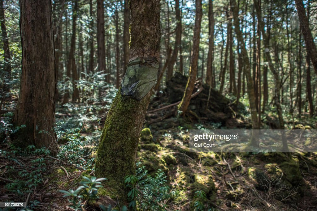 A T-shirt is tied to a tree at the scene of an apparent suicide in Aokigahara forest on March 13, 2018 in Fujikawaguchiko, Japan. Aokigahara forest lies on the on the northwestern flank of Mount Fuji and in recent years has become known as one of the world's most prevalent suicide sites. The density of the forest is believed to be a contributing factor with people often tying string to trees to find their way back to a path in case they change their mind. In 2010, officials recorded more than 200 attempted suicides in the forest with attempts said to increase during the end of the Japanese fiscal year. In recent years, local officials have stopped publicising the numbers in an attempt to decrease Aokigahara's association with suicide.