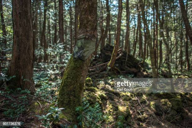 Tshirt is tied to a tree at the scene of an apparent suicide in Aokigahara forest on March 13 2018 in Fujikawaguchiko Japan Aokigahara forest lies on...