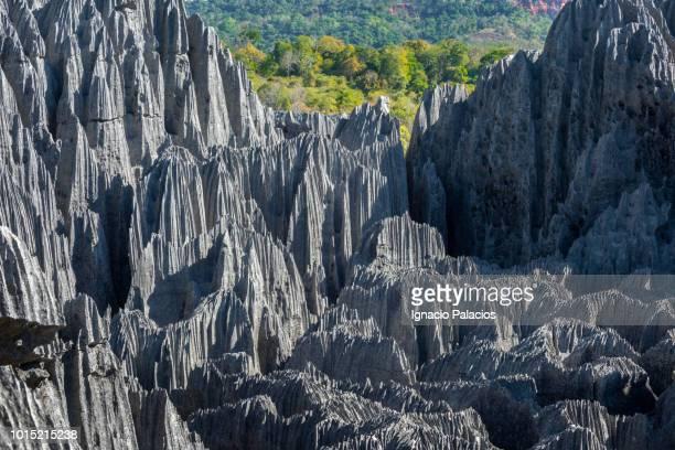 tsingy de bemaraha national park (great tsingy), melaky region of northwest madagascar - 自然保護区 ストックフォトと画像