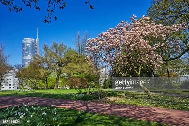 tstadtgarten public gardens in essen with rwe tower - エッセン ストックフォトと画像