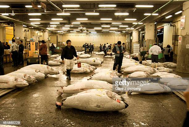 CONTENT] Tsukiji Fish Market displays tuna for sale at 5am auction