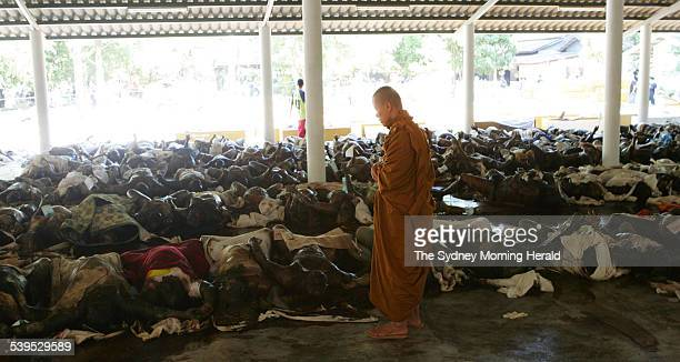 Tsunami tragedy in Khoa Lak Thailand At the Yan Yaow Temple which is operating as a morgue a buddhist monk looks after the bodies on 30 December 2004...