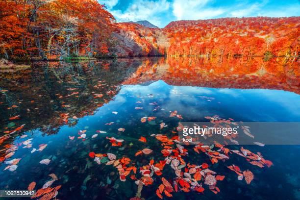 tsuta numa pond - aomori prefecture stock pictures, royalty-free photos & images